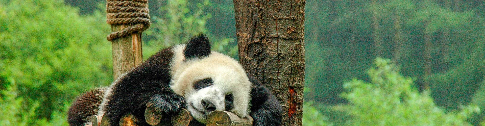 Le lac Diexi et les pandas de Wolong