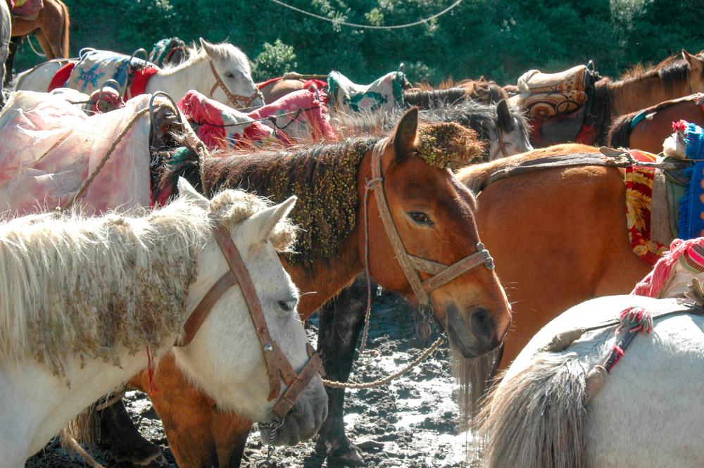 Les chevaux attendent leurs cavaliers.