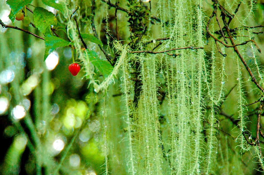 Forêt humide.