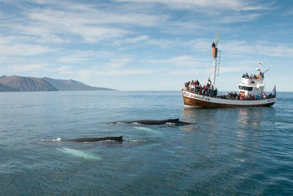 deux baleines