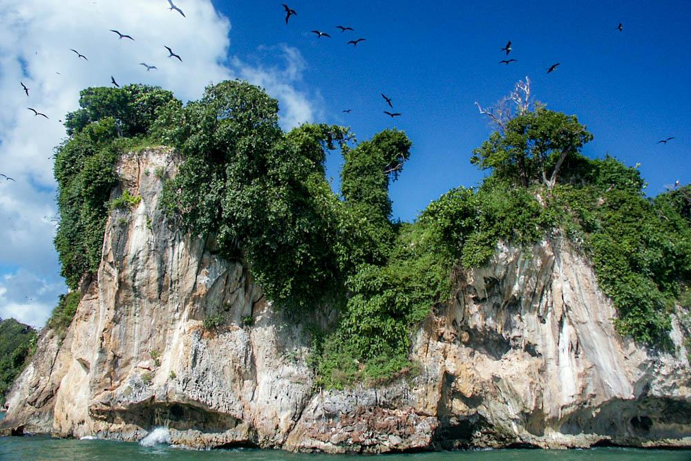 Frégates sur l'île aux oiseaux