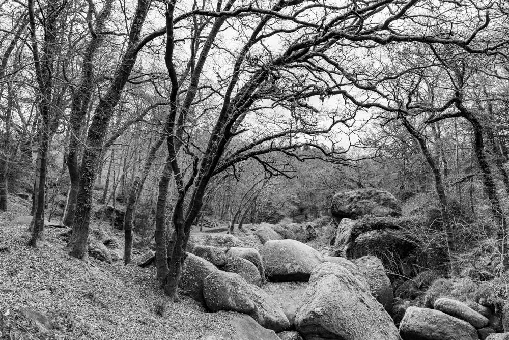 La forêt du Huelgoat