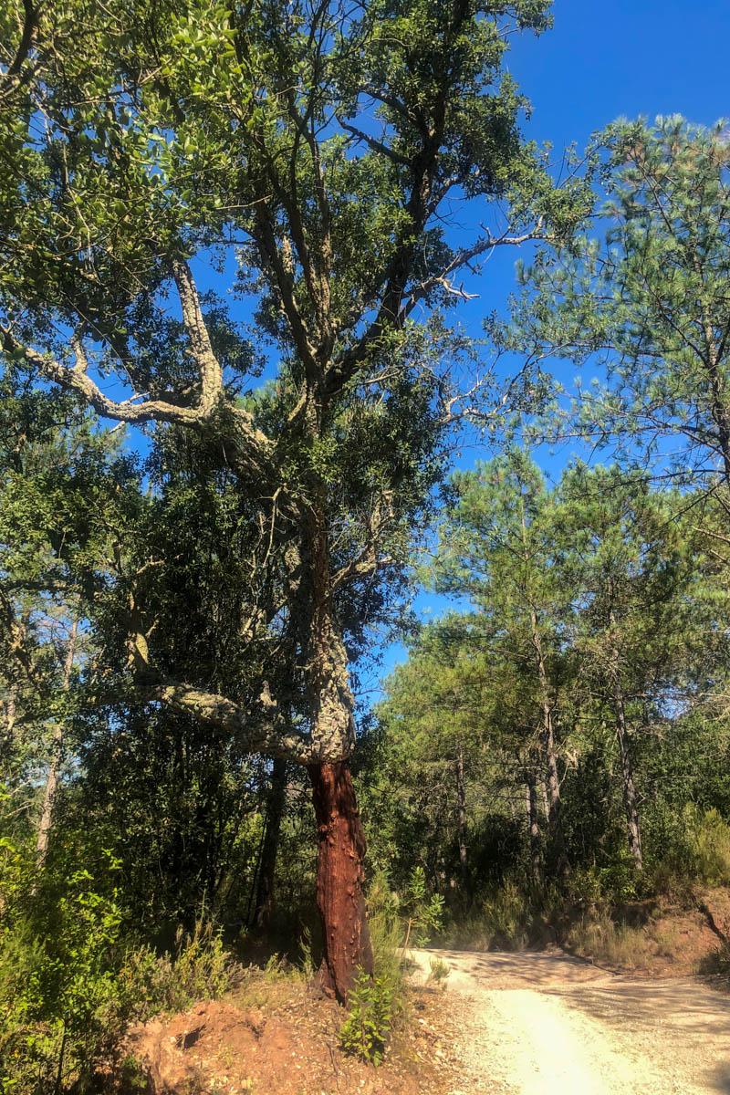 La piste dans la forêt