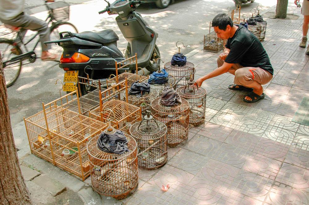 Oiseaux chanteurs à vendre