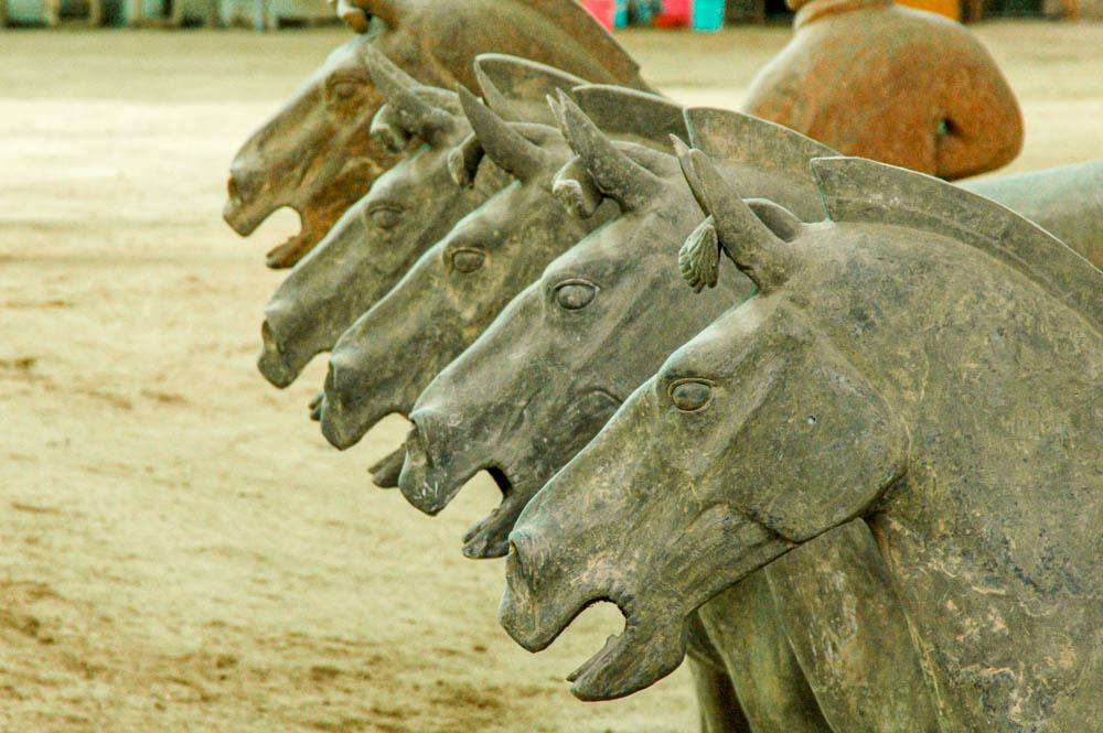 Alignement de chevaux