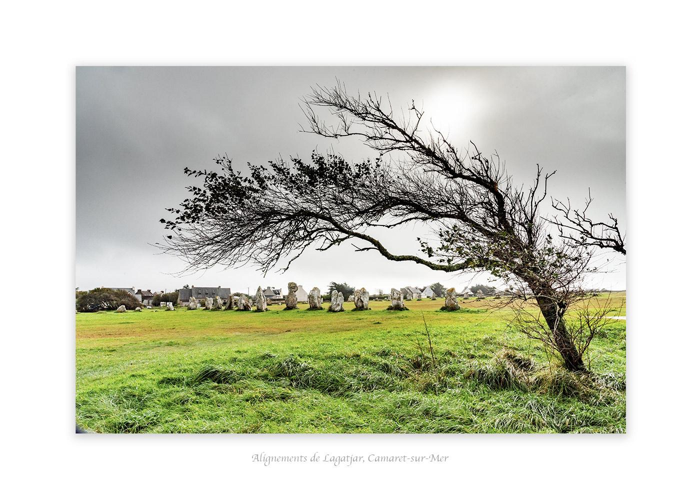 arbre couché par le vent