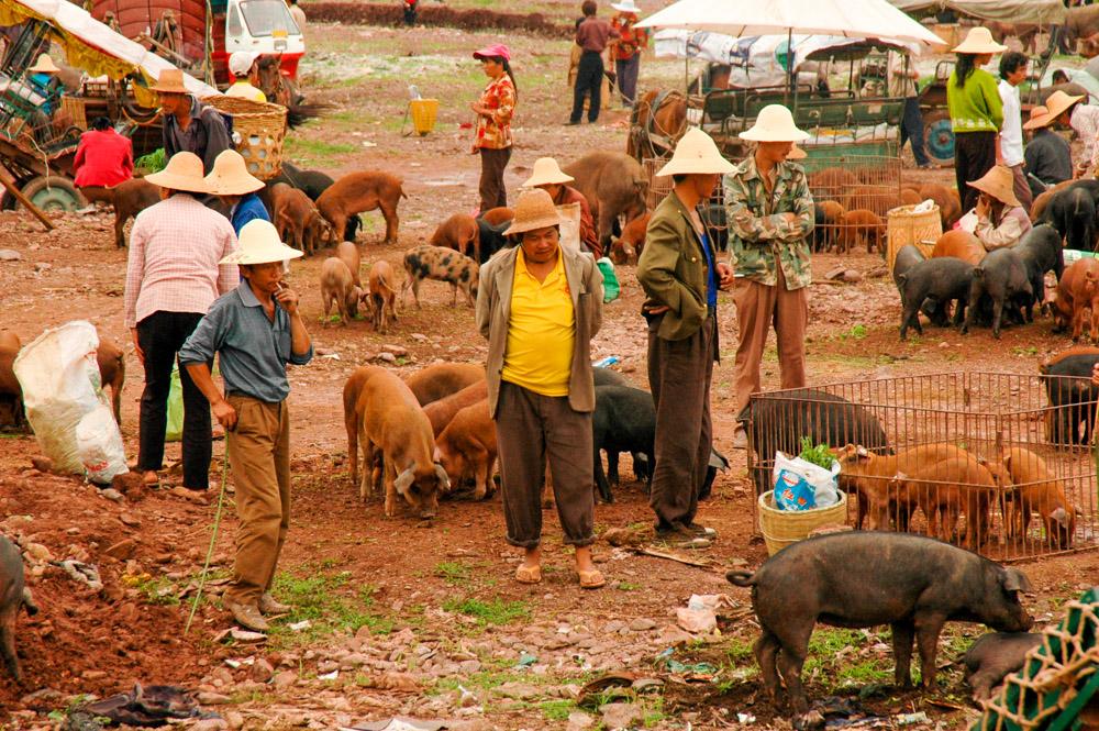 Le marché aux cochons