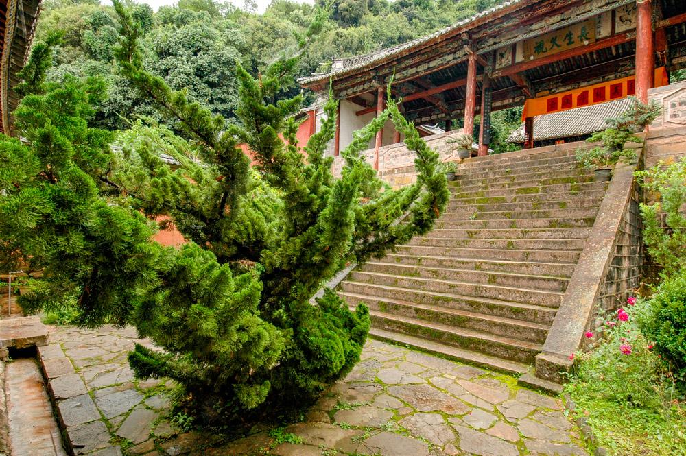 Un arbre-dragon