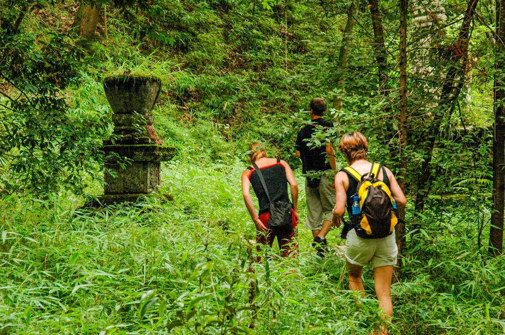 Derrière le temple, un petit bout de jungle.