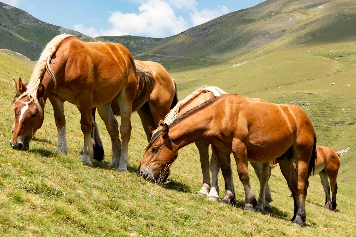 Les chevaux sont en liberté